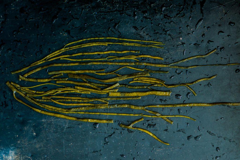 Zeewier kelp